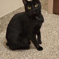 Adopt A Pet :: Payton - Elkhorn, WI