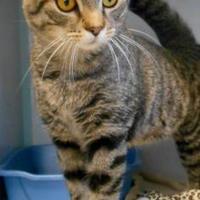 Adopt A Pet :: Thomas - Oskaloosa, IA