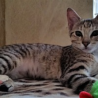 Adopt A Pet :: Minny - Edmond, OK