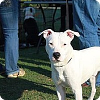 Adopt A Pet :: Ranger - Owasso, OK