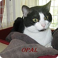 Adopt A Pet :: Opal - Shelby, NC