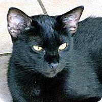 Adopt A Pet :: Tatum - Palm City, FL