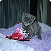 Adopt A Pet :: Cinder - Santa Rosa, CA