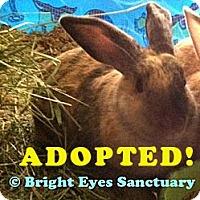 Adopt A Pet :: Daniel--ADOPTED - Rockville, MD