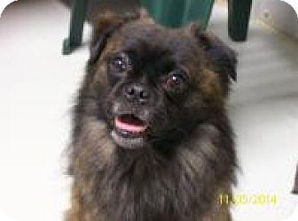 Pug/Pomeranian Mix Dog for adoption in Hartford, Kentucky - Puggy