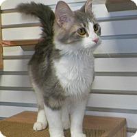 Adopt A Pet :: Silvia - Dover, OH