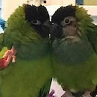 Adopt A Pet :: Tori and Gabriele - Asheville, NC