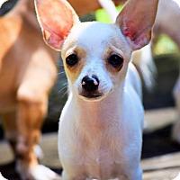 Adopt A Pet :: Steven - Arden, NC