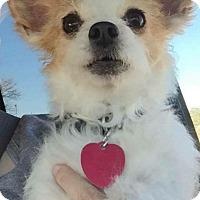 Adopt A Pet :: Spalding - Edmond, OK
