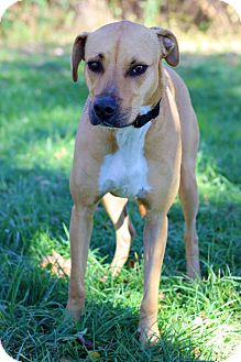 Hound (Unknown Type) Mix Dog for adoption in Waldorf, Maryland - Max
