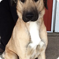 Adopt A Pet :: Ranger - Kansas city, MO