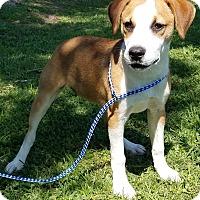 Adopt A Pet :: Lucy Lou - Walker, LA
