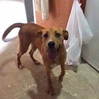 Adopt A Pet :: Tia - Aurora, MO