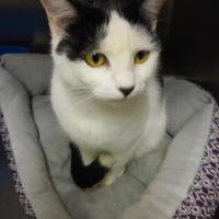 Adopt A Pet :: Randi - Lufkin, TX