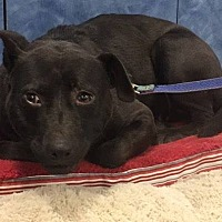 Adopt A Pet :: Alexia - Midlothian, VA