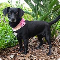 Adopt A Pet :: Twilight - Rancho Palos Verdes, CA