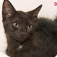 Adopt A Pet :: Oprah - San Juan Capistrano, CA