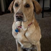 Adopt A Pet :: Sam - Broomfield, CO