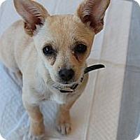 Adopt A Pet :: Tink - Santa Monica, CA