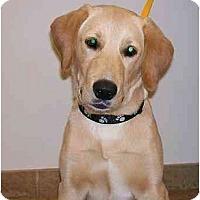 Adopt A Pet :: Knox - Cumming, GA