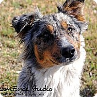 Adopt A Pet :: Peggy Sue - Dallas, TX