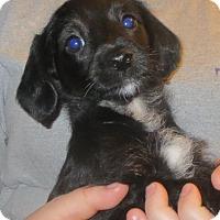 Adopt A Pet :: Suzie - Greenville, RI