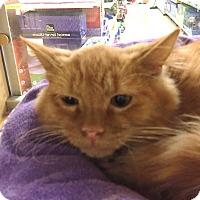 Adopt A Pet :: Jasper - Monroe, GA