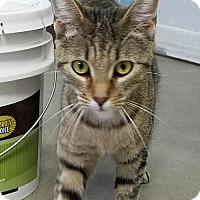 Adopt A Pet :: Billie Jo - Manteo, NC