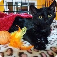 Adopt A Pet :: Wally - Edmond, OK
