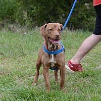 Adopt A Pet :: Lucy - Dahlonega, GA