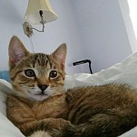 Adopt A Pet :: Spunky - Homewood, AL
