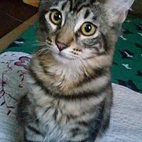 Adopt A Pet :: Hammy - La puente, CA