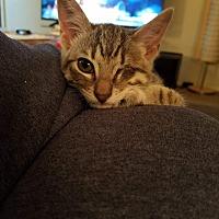 Adopt A Pet :: Dobby - DeRidder, LA