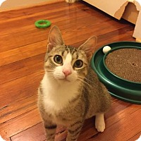 Adopt A Pet :: Mila - Newtown Square, PA