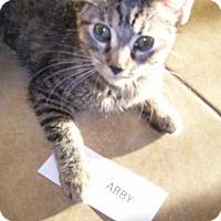 Adopt A Pet :: Abby - San Tan Valley, AZ