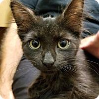 Adopt A Pet :: Boops - Trevose, PA