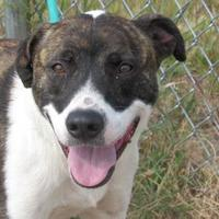 Adopt A Pet :: Zeus - Winfield, KS