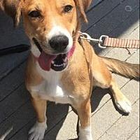 Adopt A Pet :: Jessie - Richmond, VA