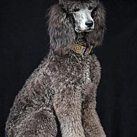 Adopt A Pet :: Shadow - SAN PEDRO, CA