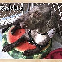Adopt A Pet :: Robbie - Orlando, FL