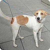 Adopt A Pet :: Miss Mabel - New York, NY