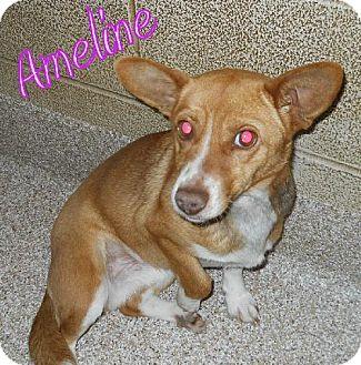 Corgi Mix Dog for adoption in Lewisburg, West Virginia - Ameline