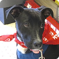 Adopt A Pet :: Albie - Scottsdale, AZ