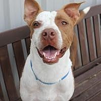Adopt A Pet :: Hank - Yukon, OK