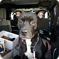 Adopt A Pet :: Kookie - Acushnet, MA