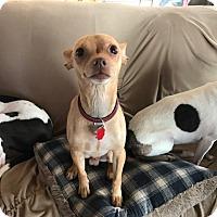Adopt A Pet :: Odie - Manhattan, IL