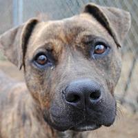 Adopt A Pet :: Little Girl - Anniston, AL