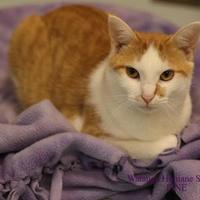 Adopt A Pet :: Pine - Boone, NC