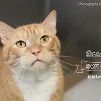 Adopt A Pet :: Oscar - Newton, IA