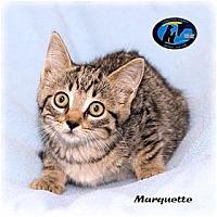 Adopt A Pet :: Marquette - Howell, MI